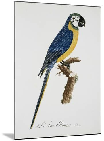 Blue and Gold Macaw-Jacques Barraband-Mounted Giclee Print