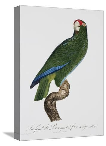 Female Puerto Rican Parrot-Jacques Barraband-Stretched Canvas Print