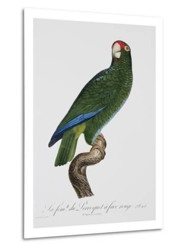Female Puerto Rican Parrot-Jacques Barraband-Metal Print