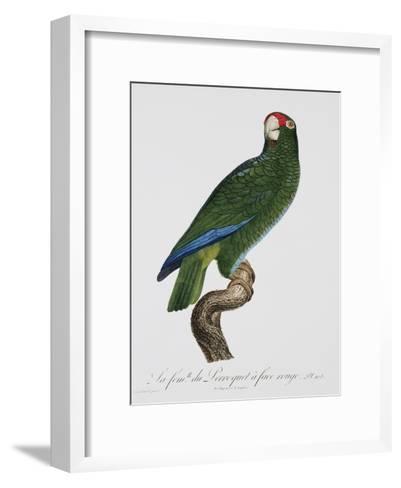 Female Puerto Rican Parrot-Jacques Barraband-Framed Art Print