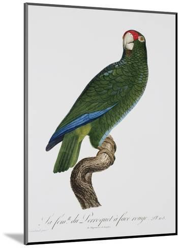 Female Puerto Rican Parrot-Jacques Barraband-Mounted Giclee Print