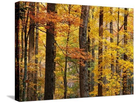 Hardwood Forest in Autumn-James Randklev-Stretched Canvas Print