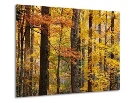 Hardwood Forest in Autumn-James Randklev-Metal Print