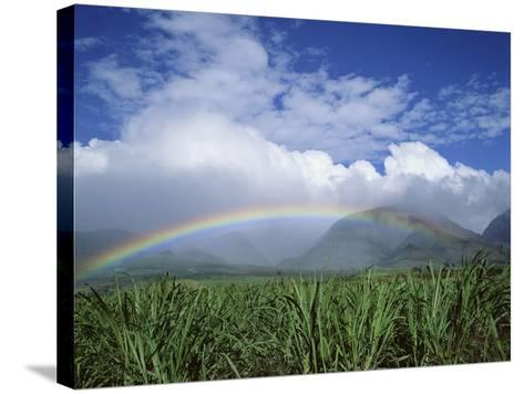 Rainbow Above Sugar Cane Field on Maui-James Randklev-Stretched Canvas Print