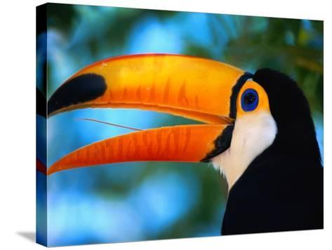 Toco Toucan-Theo Allofs-Stretched Canvas Print