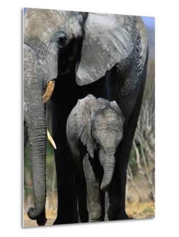 Elephant Mother and Calf-Theo Allofs-Metal Print