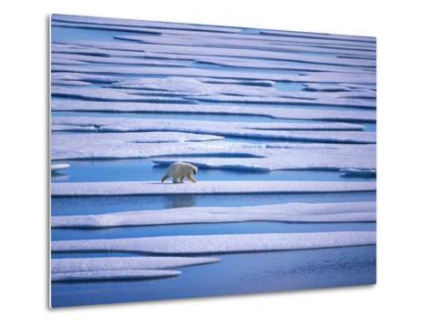 Polar Bear on Pack Ice-Hans Strand-Metal Print