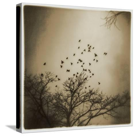 Birds and Trees, Discovery Park-Kevin Cruff-Stretched Canvas Print
