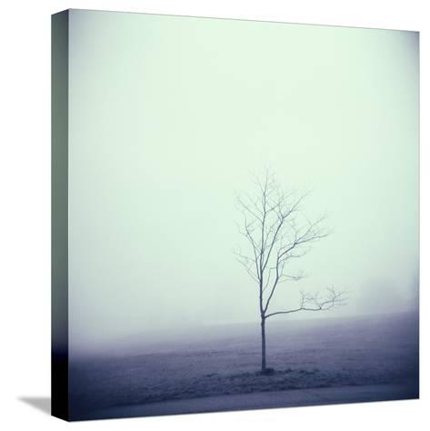 Tree Portrait, Discovery Park-Kevin Cruff-Stretched Canvas Print