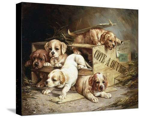 Tumbling Retriever Puppies-Frederico Olaria-Stretched Canvas Print