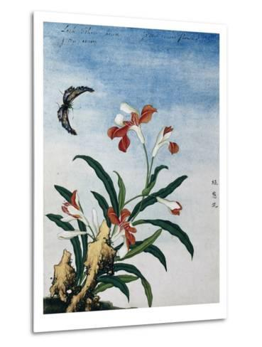 Chinese Watercolor of a Green Onion Flower--Metal Print