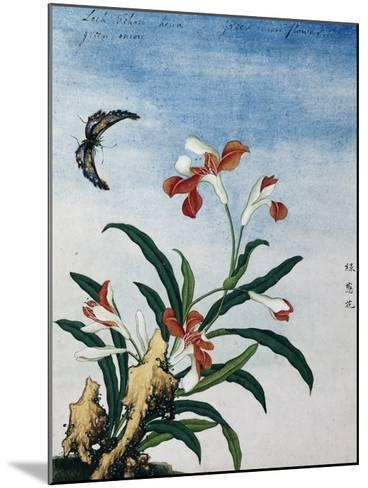 Chinese Watercolor of a Green Onion Flower--Mounted Giclee Print