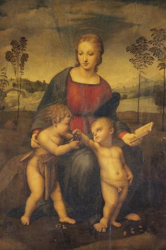 Madonna of the Goldfinch-Raphael-Stretched Canvas Print