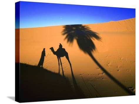 Shadow of Camel and Palm Tree-Martin Harvey-Stretched Canvas Print