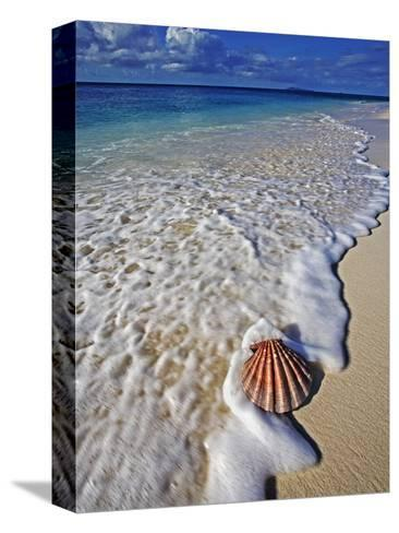 Scallop Shell in the Surf-Martin Harvey-Stretched Canvas Print