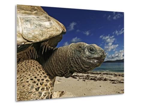 Giant Tortoise on the Beach-Martin Harvey-Metal Print