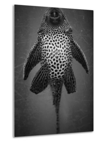 Bottom View of Catfish-Henry Horenstein-Metal Print