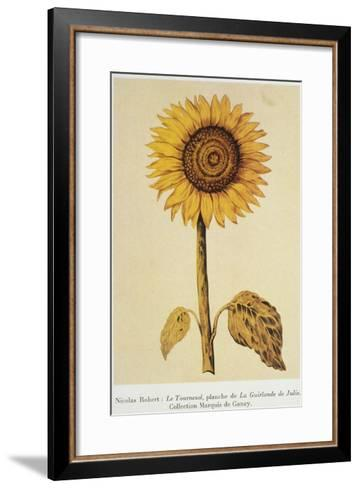 The Sunflower-Nicolas Robert-Framed Art Print