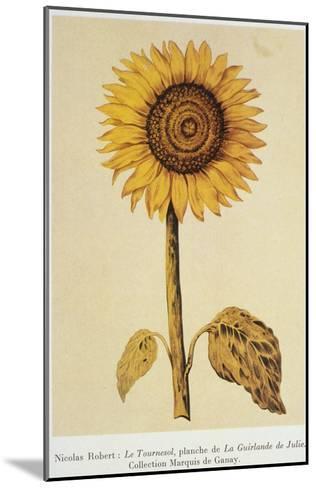 The Sunflower-Nicolas Robert-Mounted Giclee Print
