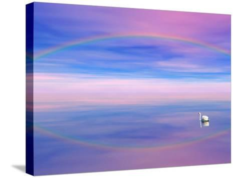 Rainbow Reflecting over Swan-Cindy Kassab-Stretched Canvas Print