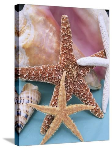 Dried Sea Stars Leaning on Shell-Robert Marien-Stretched Canvas Print
