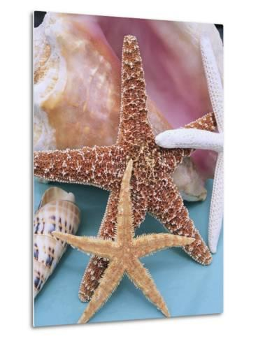 Dried Sea Stars Leaning on Shell-Robert Marien-Metal Print