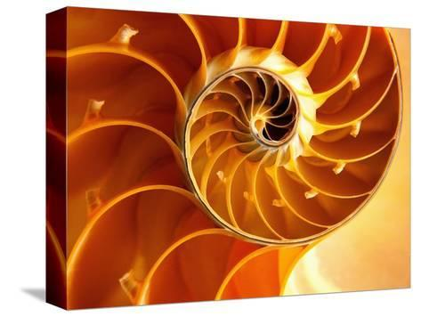Cross Section of Chambered Nautilus Shell-Robert Marien-Stretched Canvas Print
