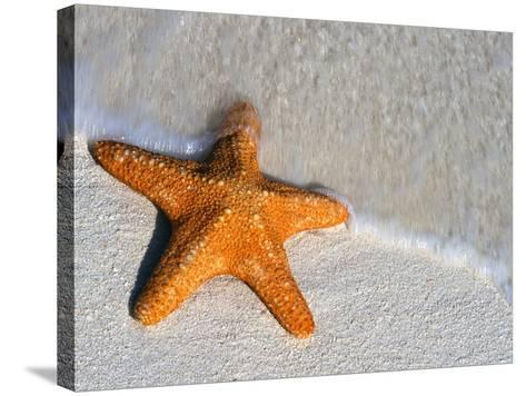 Starfish on Shore--Stretched Canvas Print
