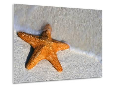 Starfish on Shore--Metal Print