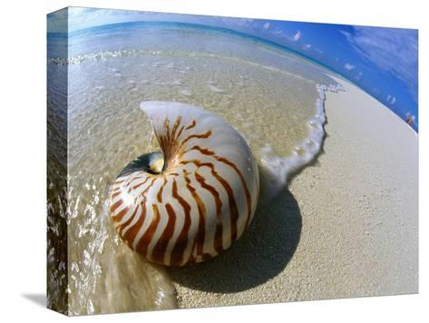 Seashell Resting on Shore-Leslie Richard Jacobs-Stretched Canvas Print