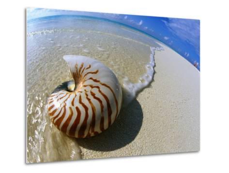Seashell Resting on Shore-Leslie Richard Jacobs-Metal Print