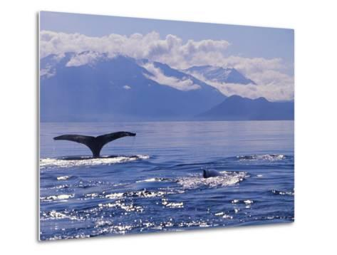 Tail of a Humpback Whale in Frederick Sound--Metal Print