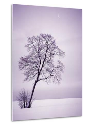Lone Tree in Snow-Jim Zuckerman-Metal Print