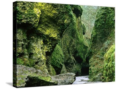 Moss Coating Oneonta Gorge-Jim Zuckerman-Stretched Canvas Print