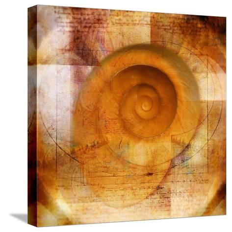 Snail Shell and Handwriting-Colin Anderson-Stretched Canvas Print