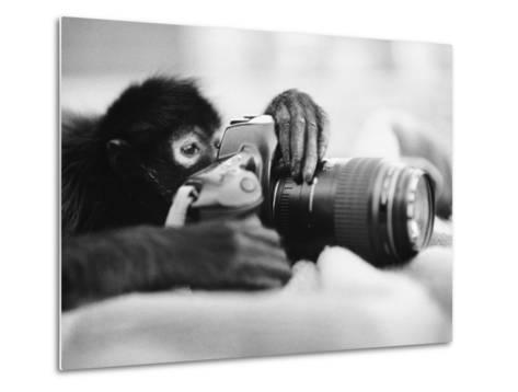 Monkey Holding Camera-Henry Horenstein-Metal Print
