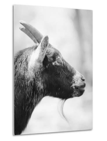 Side of a Goat's Head-Henry Horenstein-Metal Print