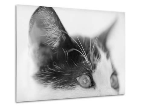 Cat's Head-Henry Horenstein-Metal Print