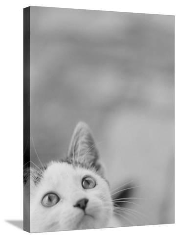 Cat's Head-Henry Horenstein-Stretched Canvas Print