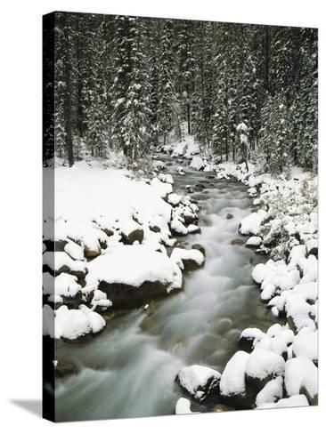 Creek Winding Way Through Forest-Craig Tuttle-Stretched Canvas Print