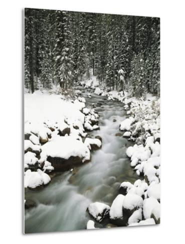 Creek Winding Way Through Forest-Craig Tuttle-Metal Print