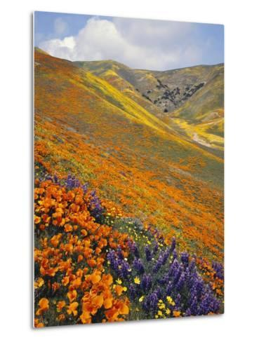 Hillside Wildflowers in Bloom-Craig Tuttle-Metal Print