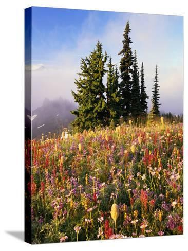Evergreens and Blooming Wildflowers-Craig Tuttle-Stretched Canvas Print