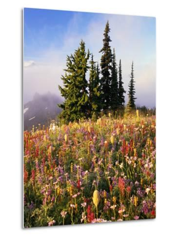 Evergreens and Blooming Wildflowers-Craig Tuttle-Metal Print