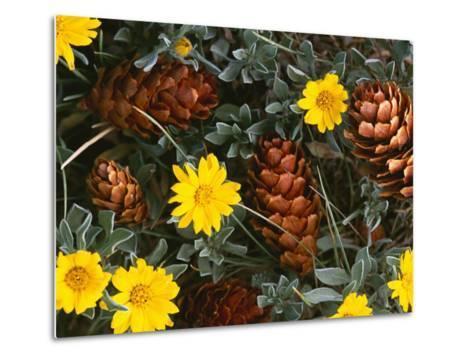 Arrangement of Flowers and Pine Cones-William Manning-Metal Print