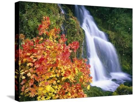 Autumn Leaves by Rushing Waterfall-Craig Tuttle-Stretched Canvas Print