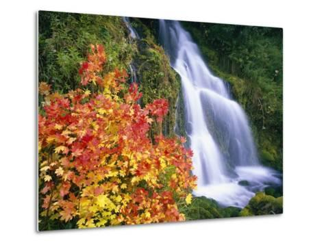 Autumn Leaves by Rushing Waterfall-Craig Tuttle-Metal Print