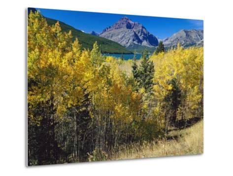Autumn Trees in Glacier National Park-Craig Tuttle-Metal Print