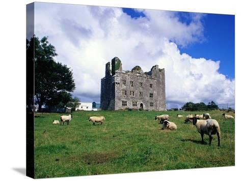 Sheep Grazing near Leamaneagh Castle-Richard Cummins-Stretched Canvas Print