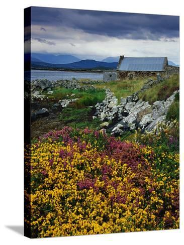 Flowers Along Carna Bay-Richard Cummins-Stretched Canvas Print